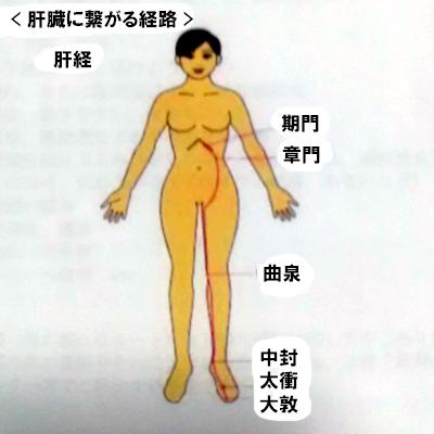 訪問マッサージ 真実の健康法「肝経」