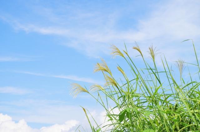 秋の乾燥肌と訪問鍼灸の効能